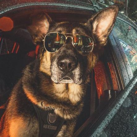 vpd-dog-calendar-2019-psd-brando-443x443